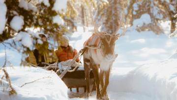 picture Reindeer Lapland Travel Äkäslompolo